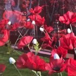 Remembrance Window Display